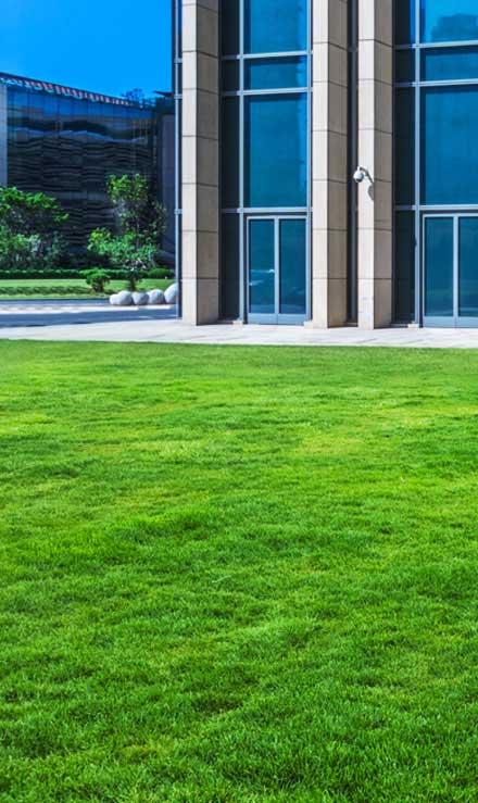 New Edge Lawns & Landscape    Aeration