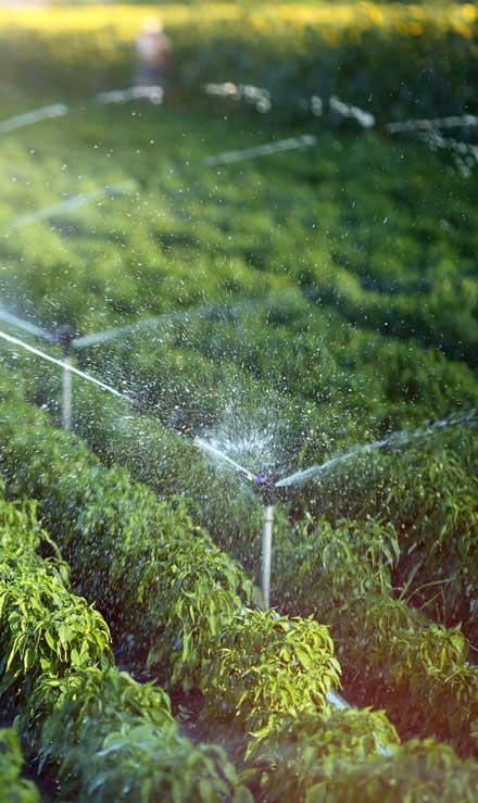 New Edge Lawns & Landscape    Irrigation System Repair