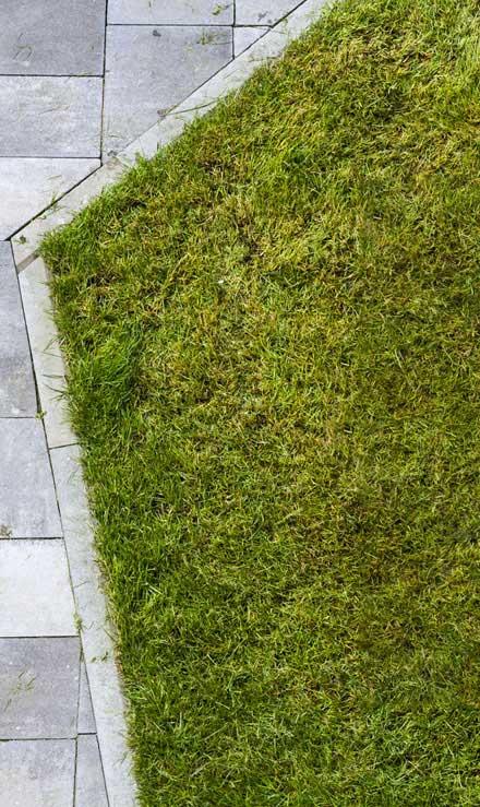 New Edge Lawns & Landscape    Lawn Dethatching