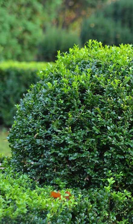 New Edge Lawns & Landscape    Shrubs & Hedges