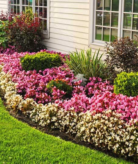 New Edge Lawns & Landscape    Garden Design